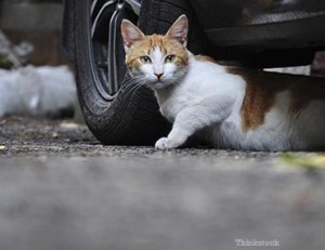 cars-cats-cold-weather-tips