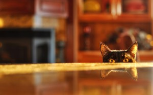 cat-table-image